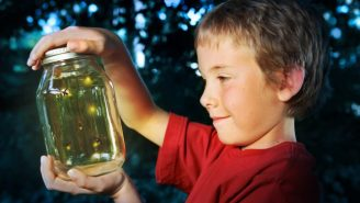 Your Lights Will Soon Be 60 Percent Brighter Thanks To Fireflies