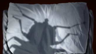 Science Has Found The Colors Bedbugs Love, So Burn Your Sheets Accordingly