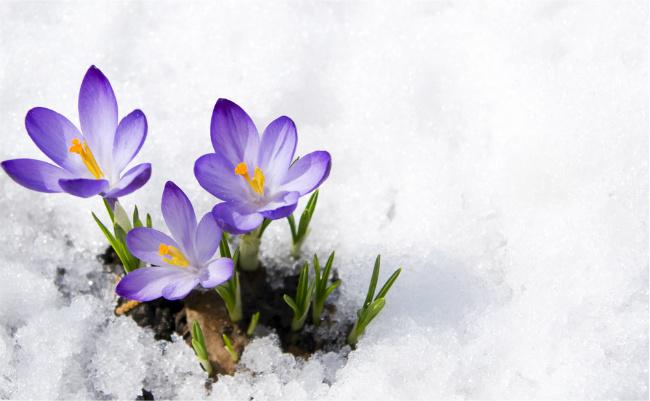 spring winter flowers