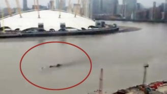 No One Can Figure Out What This Mysterious Creature Swimming In The Thames River Is