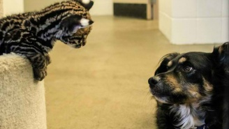 Watch A 'Nurse Dog' Care For Orphaned Baby Animals At The Cincinnati Zoo