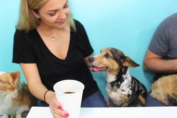 customer and dog
