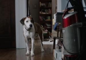 ABC Announces Its Midseason Premiere Dates And 'Downward Dog' Is Finally Seeing The Light Of Day