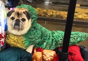 This Humane Society 'Star Wars' Pug Crawl Is The Most Adorable Charity Event In The Galaxy