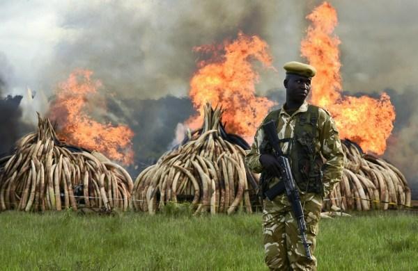 KENYA-IVORY-WILDLIFE-FIRE
