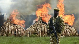 Kenya's Massive Ivory Burn Should Light A Fire Under Us All