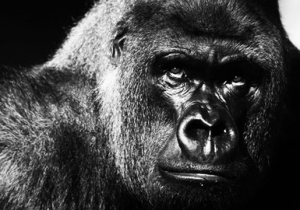 Do We Deserve To Keep Large Mammals In Zoos?