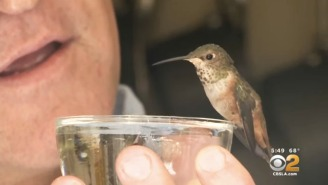 This Hummingbird Is Forever Grateful To The Dog And Man Who Rescued Her