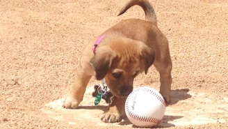 This Baseball Team Found An Abandoned Puppy In The Stadium Parking Lot, So They Adopted It