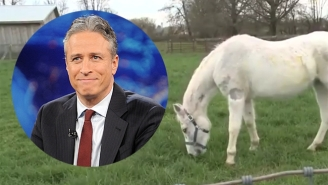 Nice Guy Jon Stewart And His Wife Adopted An Abused Horse That Had Been Shot With Paintballs