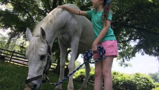 The Abused Horse That Jon And Tracey Stewart Adopted Has Sadly Passed Away