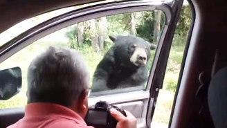 These Kids Completely Freak Out When This Bear Just Wants A Chill Inside Their Van