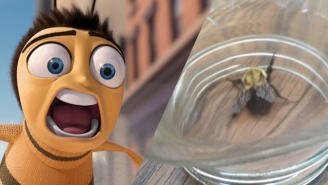 A Captured Bee Was Forced To Watch 'Bee Movie' Against Its Will