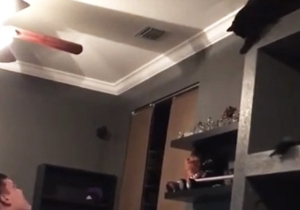 This Cat Definitely Did Not Have A Plan When It Climbed Up To The Top Of The Shelf