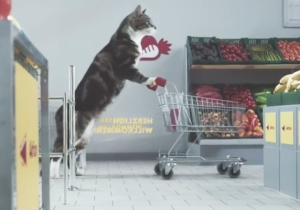 Felines Be Shoppin' In This Amazing Internet Cat Video-Themed German Grocery Store Commercial