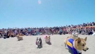 San Francisco's Bi-Annual Corgi Con Celebration Remains Endlessly Adorable