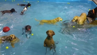 This Non-Swimming Dog At The Puppy Pool Party Is Alarmingly Relatable