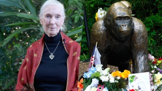 Jane Goodall Sends A Remorseful Message To The Cincinnati Zoo Over The Death Of Harambe