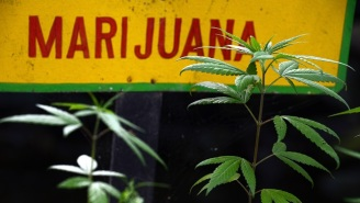 Jamaica Wants To Use Airport Kiosks To Make Your Weed Buying Easier