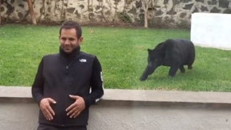 Watch This Panther Sneak Up And Pounce On This Unsuspecting Human