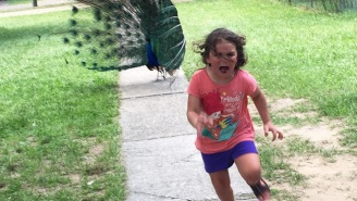 This Little Girl Being Chased By A Peacock Is The Internet's Most Terrified Meme