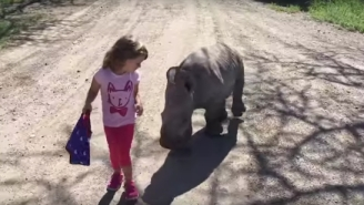 This Little Girl Is Best Friends With A Rhino And The Video Will Make You So Jealous