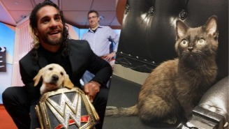 Noted Dog Lover Seth Rollins Got A Kitten And It's The Only News That Really Matters