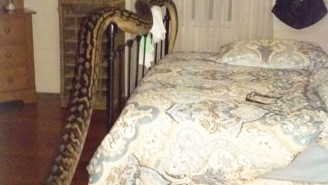 An Australian Woman Filmed This Terrifying 16-Foot-Long Python That Invaded Her Home