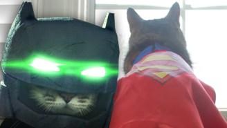 'Batcat V Supercat' Might Be Better Than 'Batman V Superman'