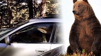 A Relatable Everybear Managed To Lock Himself Inside Of A Subaru