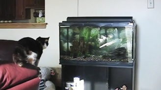 Some Cats Might Have Less Than Nine Lives By The End Of This Cat Fails Compilation
