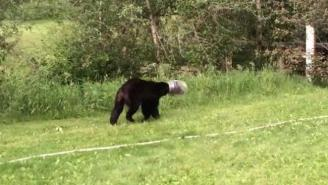 This Man Lassoed A Bear With A Cheese Ball Container Stuck On Its Head