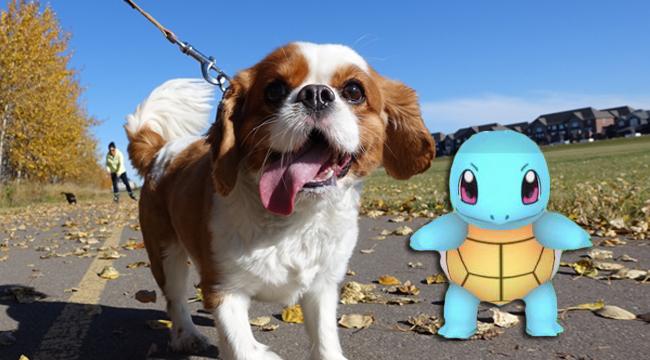 dog-poke