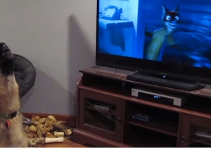 This German Shepherd Is Clearly A Big 'Zootopia' Fan