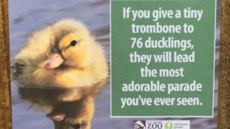 A Prankster Infiltrated The Los Angeles Zoo And Posted A Slew Of Hilarious Animal Facts