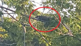 We Had A Good Run, But Alligators Are Climbing Trees Now