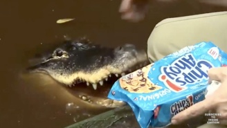 A Florida Man Is Fighting To Keep His Pizza And Cookie-Loving Pet Alligator