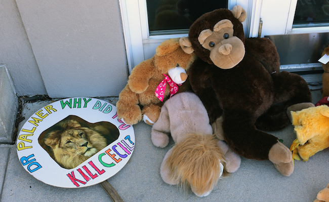 Memorial And Protest Held At Office Of Minnesota Dentist That Killed Famed Lion In Zimbabwe