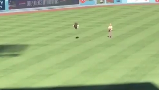 An Eagle At A Dodgers Game Took Independence Day Literally And Flew Away From Its Handler