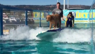 This Surfing Dog At An Oakland Athletics Game Will Help You Forget About Your Troubles