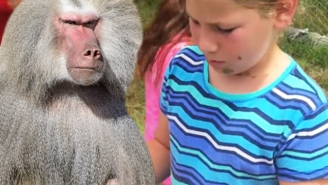 An Angry Baboon Threw Poo Over An Entire Family