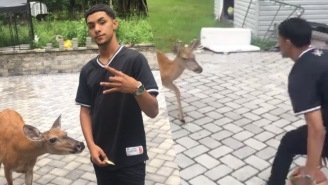 This Teenager Is Best Friends With A Basketball-Playing Family Of Deer