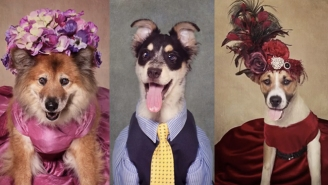 A Photographer Is Dressing Up Rescue Dogs In Silly Outfits To Help Get Them Adopted