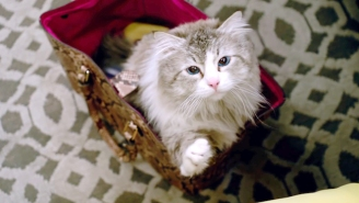 The Unlikely Story Behind 'Nine Lives' And The Life It Saved