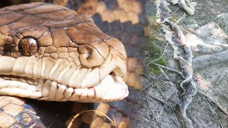 You Now Have A Giant, Slithering Reason To Never Travel To Maine