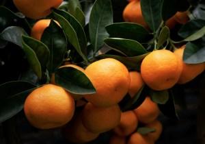 Orange Juice's Popularity Is Falling Fast