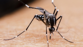 The FDA Approves The Use Of Genetically Modified Mosquitoes To Fight Zika