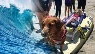 This Dog Brings Surfing To Kids With Spinal Muscular Atrophy
