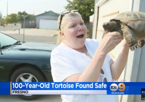 This 100-Year-Old Pet Tortoise Escaped And Traveled Six Miles In An Attempt To Find Love