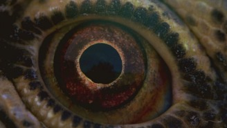 Terence Malick new film designed to make us all feel insignificant